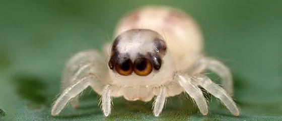 Half baby, half spider, about seven-eighths cute.